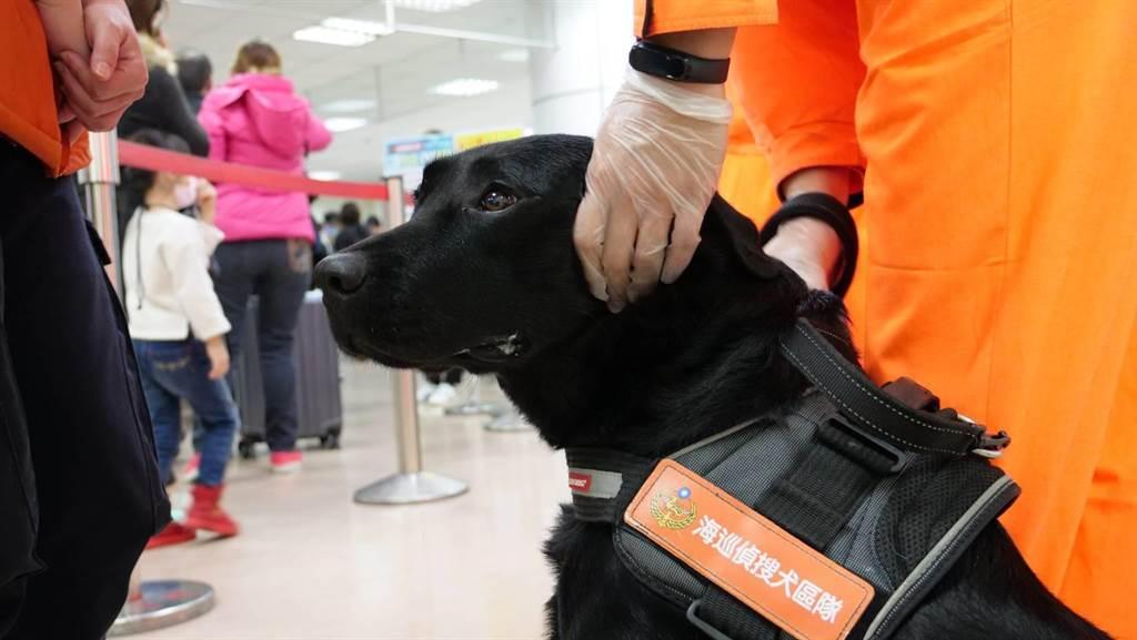 基隆第二岸巡隊海巡偵搜犬區隊完成特訓,7月起將加入邊境勤務。(岸巡提供/許家寧基隆傳真)