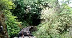 「阿里山秘境」消失多年再爆紅!美景遭遊客破壞竟出現「屎路」