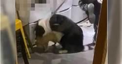 放狗咬浣熊遭罵爆 網紅咖啡廳負責人出面致歉