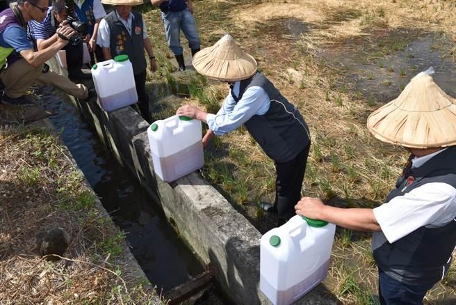 液態稻草分解菌也可直接在水源頭滴灌方式散布至整個稻田。〔謝明俊攝〕