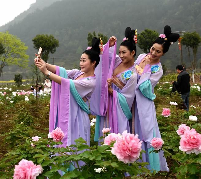 女子身穿古裝,在浙江仙居江南牡丹花節中拍照留影。(中新社資料照片)