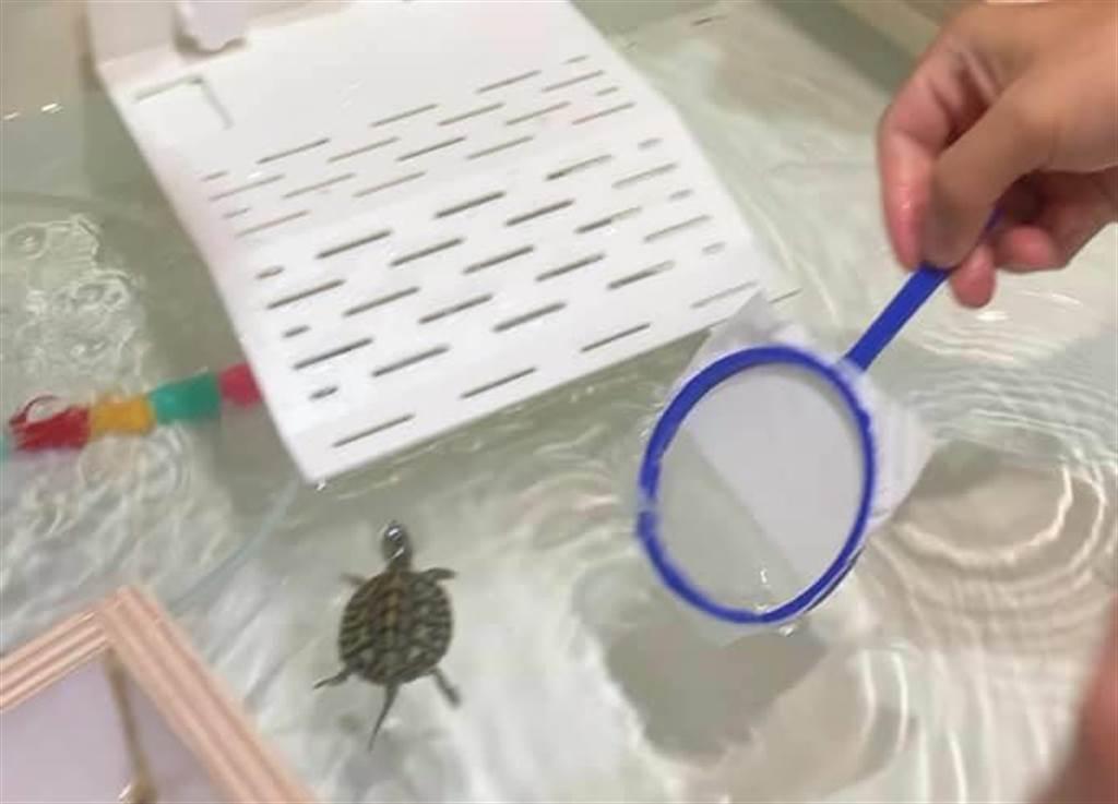 近日有民眾投訴,在夜市撈烏龜,5人竟要價1千元!傻眼之餘也只能無奈付款。(摘自/爆怨公社)