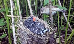 驚見小鳥餵食「巨嬰」 背後竟藏殺子之仇