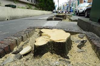 黑板樹竄根破壞人行道 台灣銀行賜死22棵
