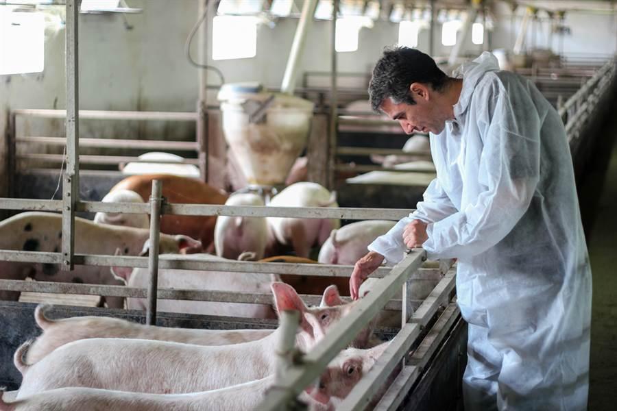 陸再現新流感病毒!專家:由豬傳人恐大爆發。(示意圖/Shutterstock)