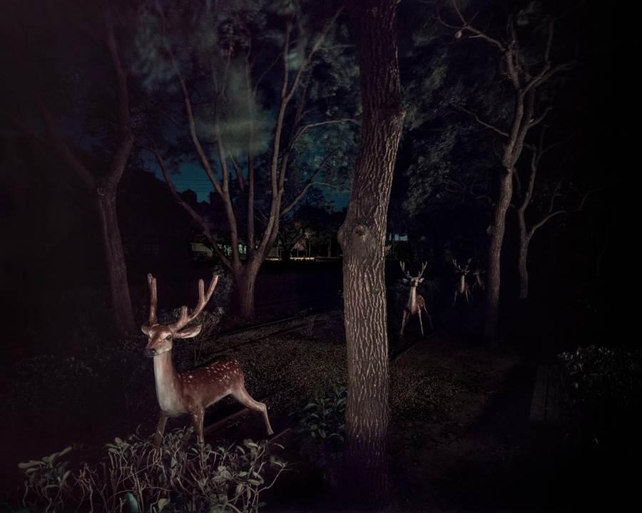 藝術家彭一航的《幽靈公園》系列,以公園內水泥製的動物為拍攝對象。(國美館提供)