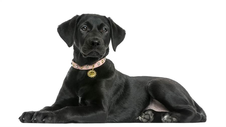1名女網友透露,自己學生時代所領養的1隻流浪狗,經常總愛在自己與男伴進行床事時擠上床湊一咖大搞破壞。(示意圖/達志影像/Shutterstock提供)