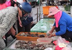 澎湖海膽開放採捕首日 初估產量少了一大半