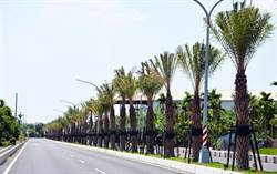 前瞻挹注 屏東道路景觀大改造