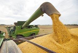 陸或緩購農產品 直踩川普痛腳