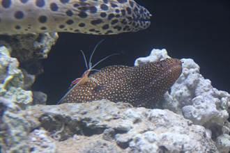趣味海洋生物展開跑 海科館祭出星光票及超殺優惠