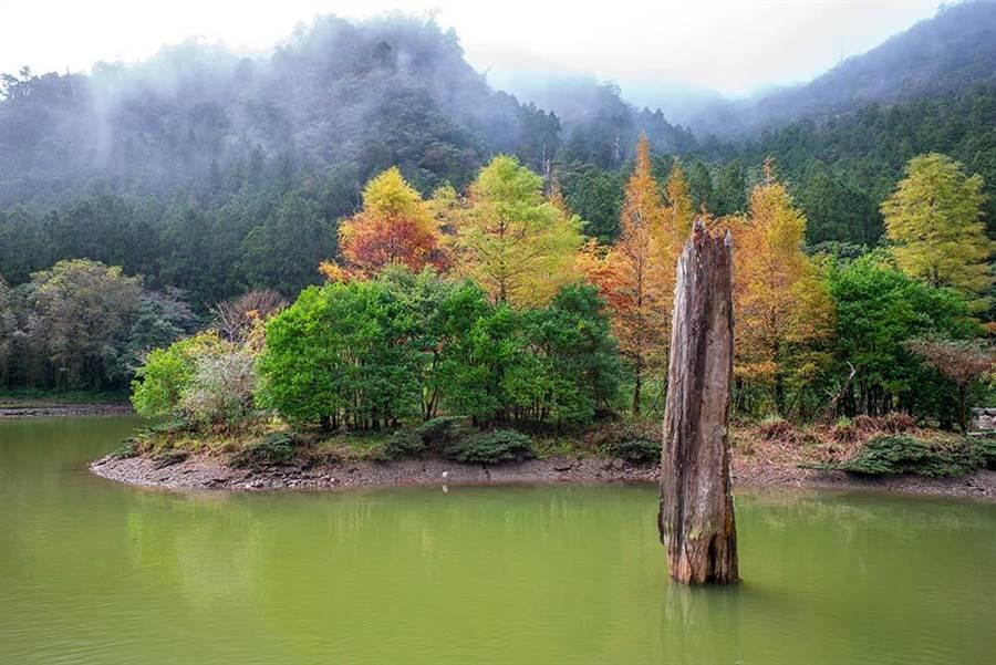 明池森林遊樂區風景。圖:五福提供