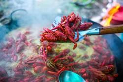 頭條揭密》小龍蝦遠渡中土引爆狂潮 遭陸饕客吃成瀕危物種?