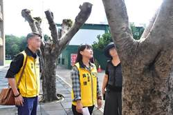 避免樹倒傷人 黃捷催生樹木電子身分證