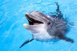 富人的高尚虐待休閒 活海豚衝浪板