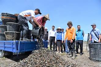 台西文蛤殼暫置場 資源再利用固砂防揚塵