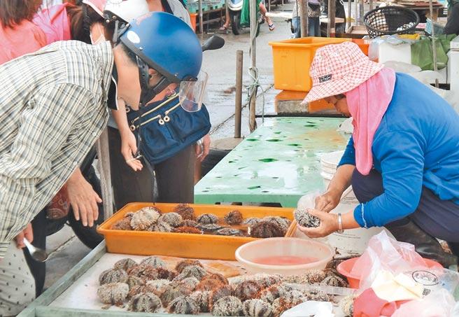 澎湖開放採捕馬糞海膽第一天,魚市場只見零星蹤影,今年產量再創新低。(陳可文攝)