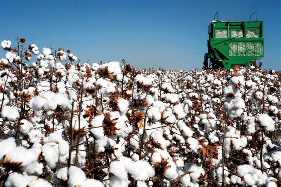 疫情影響下,紡織業受制於國際期貨的棉花廠,也因成本上升,選擇關機、放無薪假。(圖/123RF)