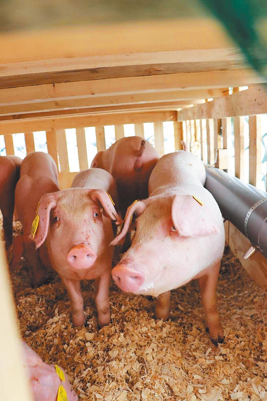 5月14日,一批來自法國的種豬運抵長春龍嘉國際機場。(新華社)