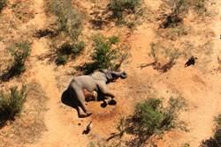 360頭大象神秘死亡 可能原因令人震驚