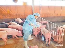 3株H1N1豬流感病毒株檢驗出爐 已排除新型豬流感