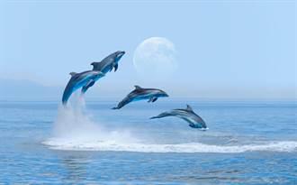 海豚慘淪「衝浪板」遊客付錢就能騎!海洋世界否認虐待:活動不停辦