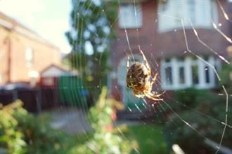 發麻照曝光!蜘蛛吐絲覆蓋城鎮 大遷徙宛如末日