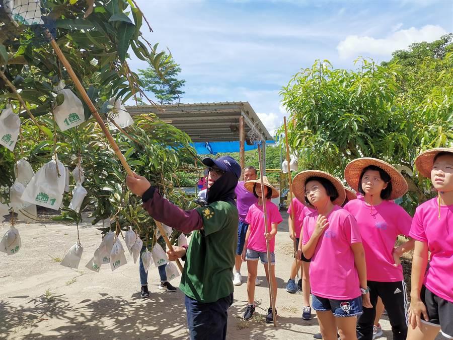 台南市青草國小小朋友到星光果園免費體驗採果。(劉秀芬攝)
