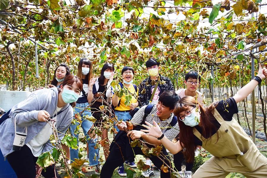 朝陽科大工設系學生協助彰化大村農民,導入科技技術、將廢棄的葡萄藤重新利用,帶動農村再生與社區發展。(朝陽科大提供/林欣儀台中傳真)