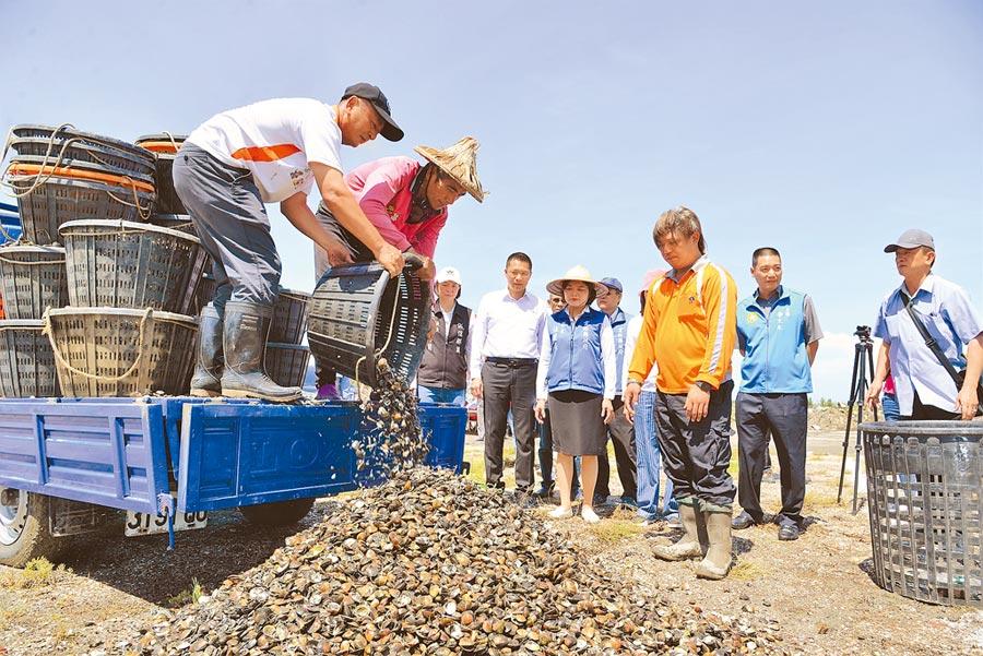 雲林縣台西鄉文蛤殼暫置場啟用,進行資源再利用固砂防揚塵。(張朝欣攝)