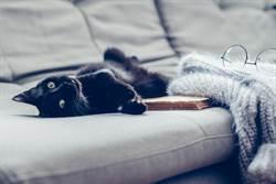 監視器拍神秘黑影躺沙發 主人鼻酸:愛貓過世1年