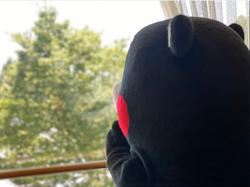 暴雨狂炸日本九州 熊本熊推特曝近况纷丝们好担心