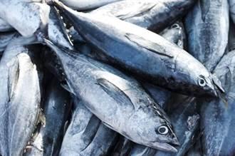港檢出台灣魚鬆重金屬超標 食藥署將往源頭追查