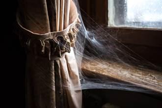 膽小勿入!蜘蛛吐絲覆蓋變「鬼城」 猶如「世界末日」背後真相曝光
