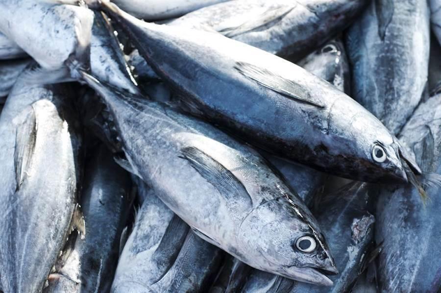魚鬆的原料是深海魚,而深海魚如鮪魚、旗魚等,因處於食物鏈頂端,壽命也很長,體內容易有甲基汞(有機汞的一種)的殘留。(示意圖/達志影像)
