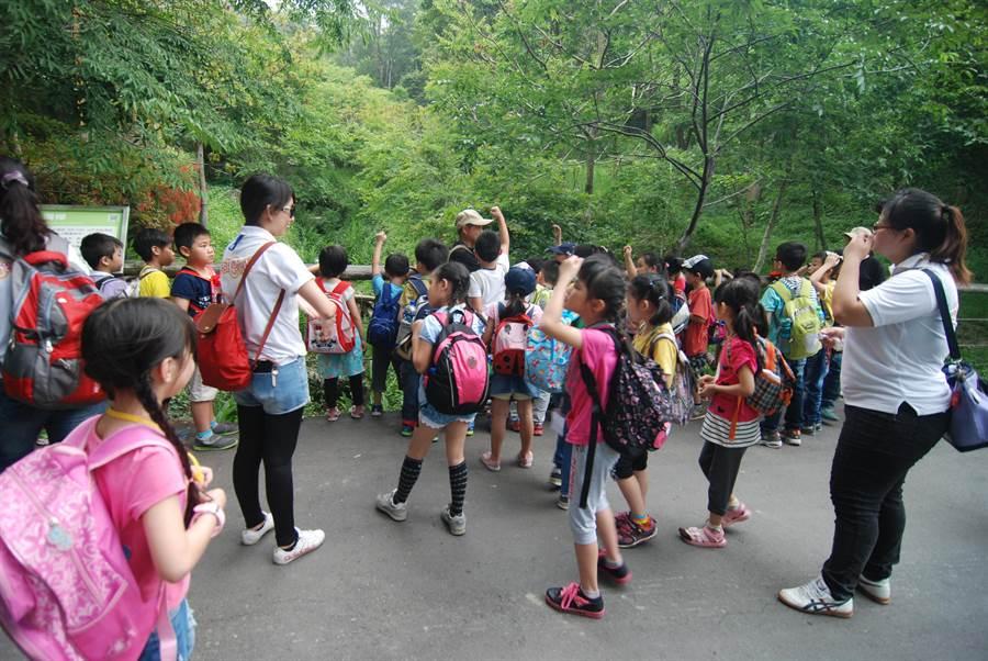 東勢林場遊樂區舉辦「2020東勢林場夏戀森林」系列活動,歡迎報名參加。(東勢林場提供/陳淑娥台中傳真)