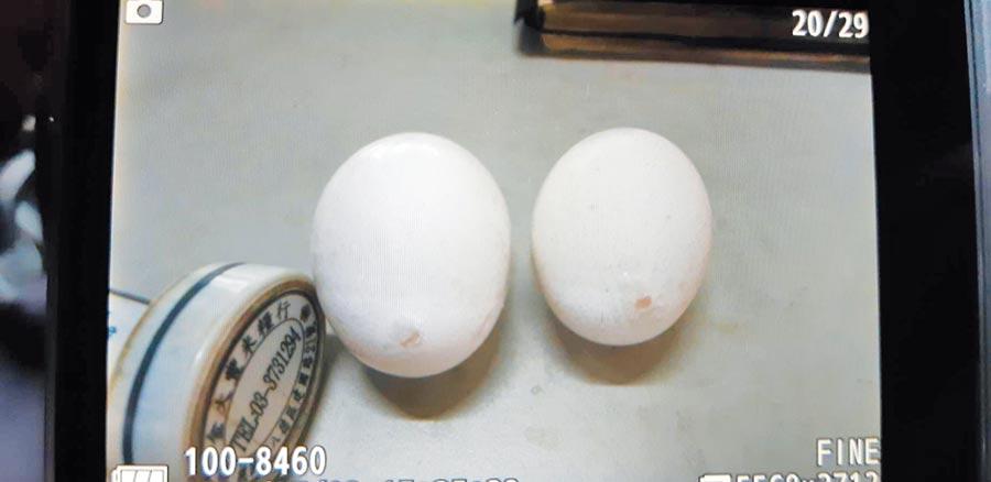 桃園市衛生局稽查八德區1家雜糧行,發現業者販賣破蛋,竟用指甲油修補。(桃園市衛生局提供/賴佑維桃園傳真)