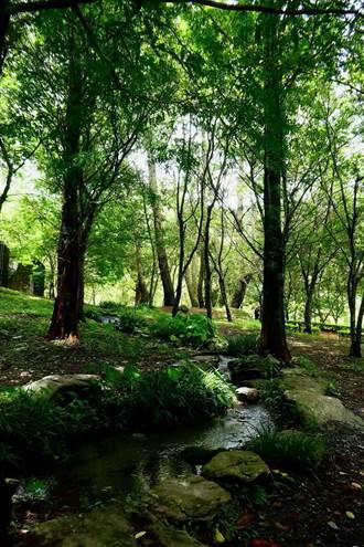 奧萬大搶避暑商機 推森林自然體驗營隊
