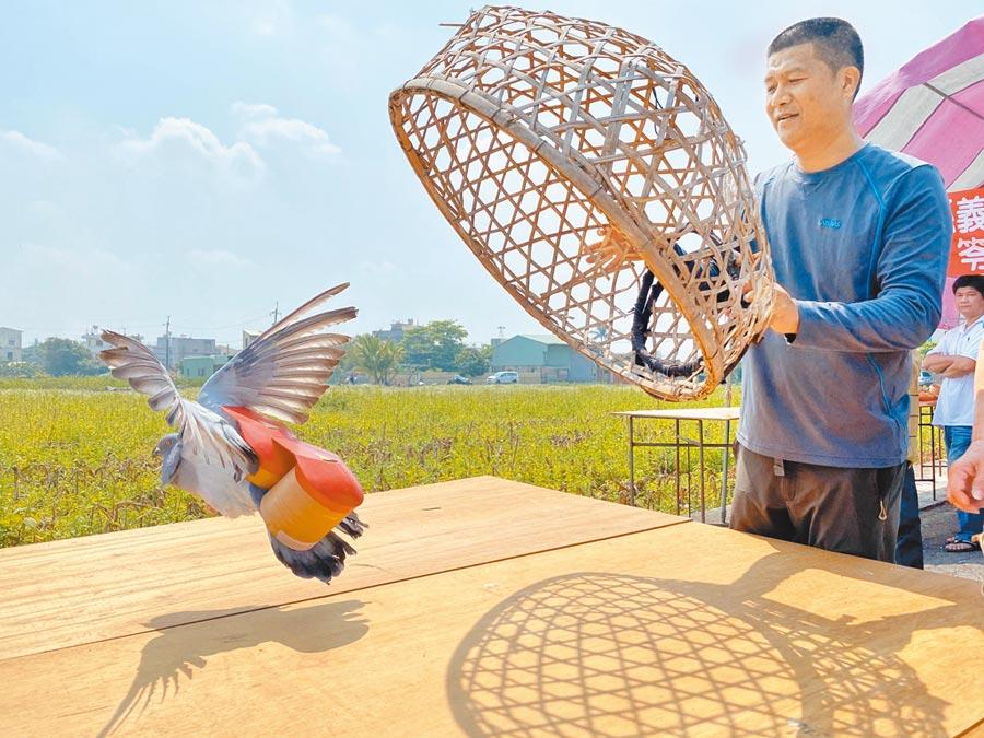 台南學甲、鹽水、新營及嘉義義竹盛行的放笭鴿文化民俗,面臨傳承危機,63歲的謝榮哲是全台僅存的鴿笭製作師傅。        (張毓翎攝)