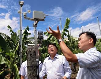 推動智慧農業 屏東香蕉外銷年年增加
