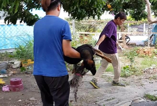 台灣動物緊急救援小組將受傷的浪浪送醫。(台灣動物緊急救援小組提供/林瑞益高雄傳真)