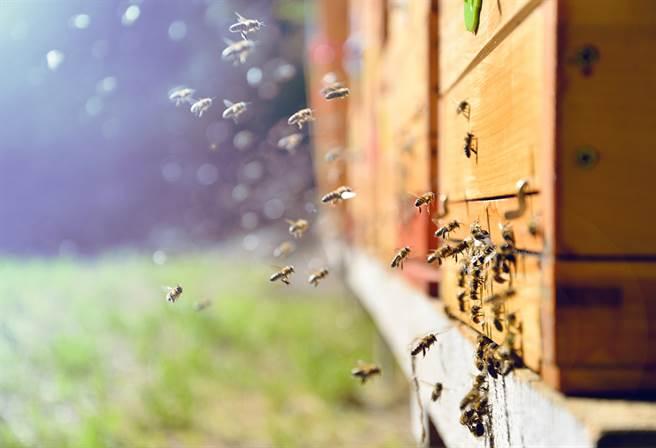為何螞蟻不去蜂箱搬蜂蜜?養蜂人揭密關鍵(示意圖/達志影像)