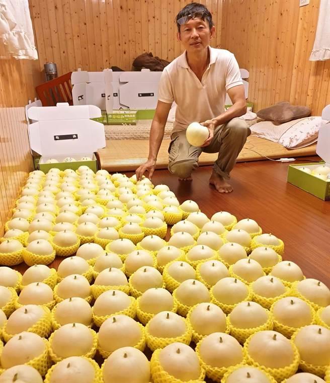 屏東內埔農友邱孟賢種植有機香瓜,剛採下的香瓜為了後熟,他將臥室整日開冷氣當成冷房,甚至晚上也和香瓜睡在一起。(潘建志攝)