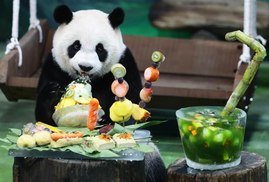 動物園的大貓熊「圓仔」6日滿7歲,園方舉辦「圓仔7歲生日—圓粉慶生派對」,特別為圓仔準備以臭豆腐等七種台灣小吃為意象製作的生日蛋糕,讓好奇的圓仔大饗朵頤。(季志翔攝)