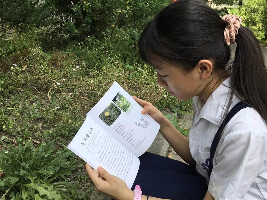莒光國小指導學生利用植物的特徵創作出童趣的詩,編製「莒光原生植物圖鑑」。(莒光國小提供)
