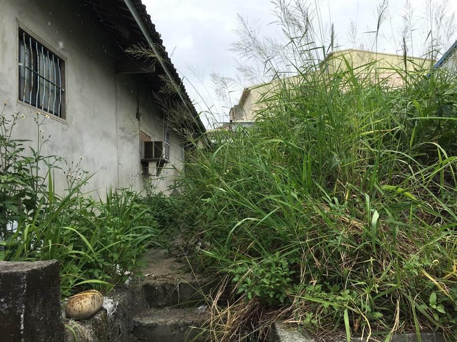 居民抱怨民權一街重劃區內有一處雜草叢生,甚至毒蛇出沒,讓人膽顫心驚。(陳淑娥攝)