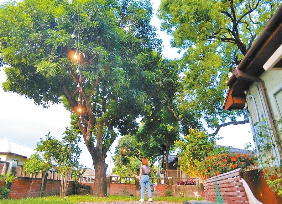 屏東市勝利星村除了有日式眷舍群,老樹也是重要的生態資產。縣政府定期進行老樹健檢與養護,並與店家一起維護老樹。(潘建志攝)