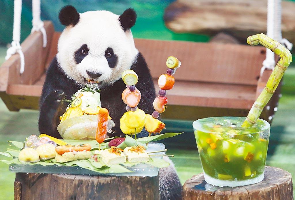 台北市立動物園的大貓熊「圓仔」6日滿7歲,園方特別舉辦慶生派對,讓好奇的圓仔大快朵頤。(季志翔攝)