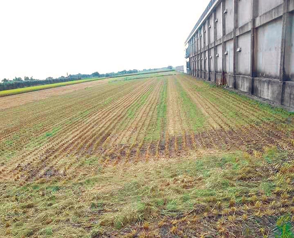 彰化1名施姓農民,在臉書貼文表示自己近5分地稻田,遭不明人士盜割。(芳苑分局提供/吳建輝彰化傳真)