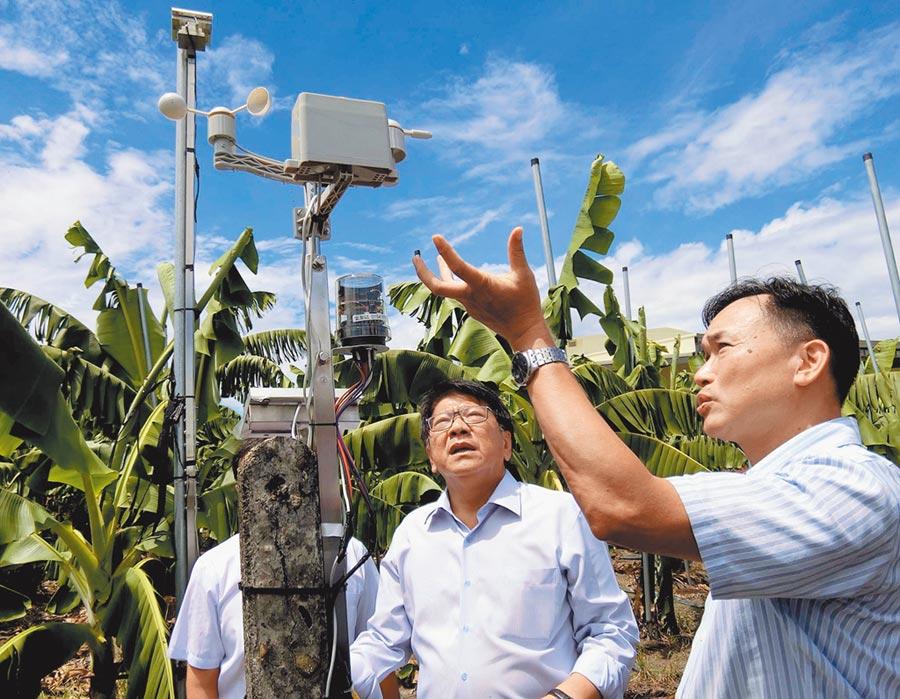 屏東縣政府與產學合作推動「築城計畫」,透過科技發展智慧農業,在香蕉園裡裝設儀器,將數據建立標準化模組,縣長潘孟安(中)也到園中了解。(潘建志攝)